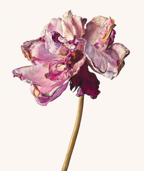 Rosie Sanders, The last rose
