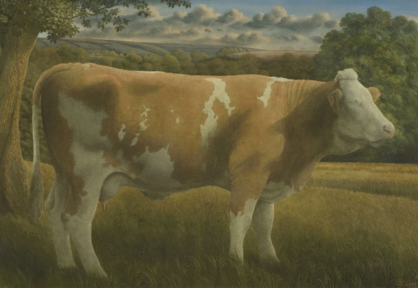 James Lynch, Simmental Cow