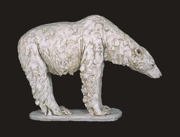 Tanya Brett, Male Polar bear