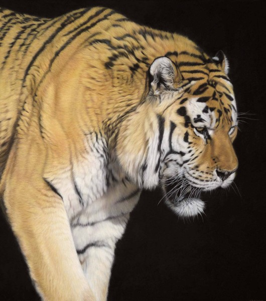 Gary Stinton, Amur Tiger - Close Encounter III