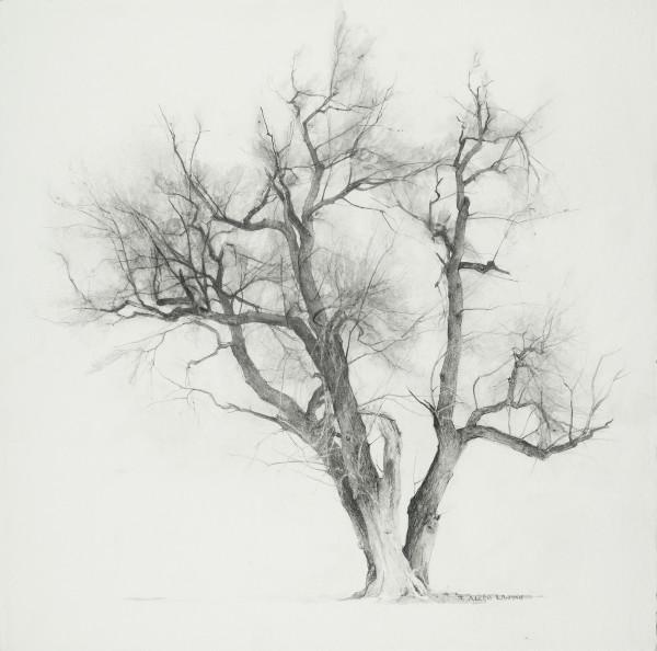 T. Allen Lawson, Study - Evening Tree