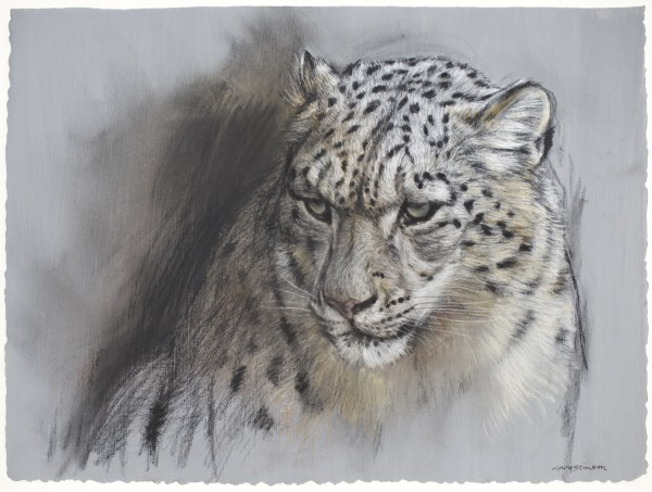 Gary Stinton, Snow Leopard Sketch