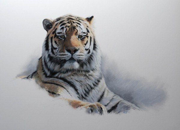 Gary Stinton, 20th Anniversary Exhibition Amur Tiger