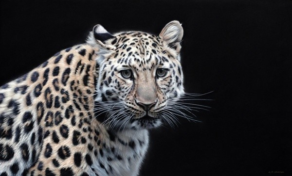 Gary Stinton, Eye to Eye I - Amur Leopard
