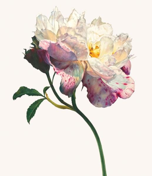 Rosie Sanders, The summer's flower