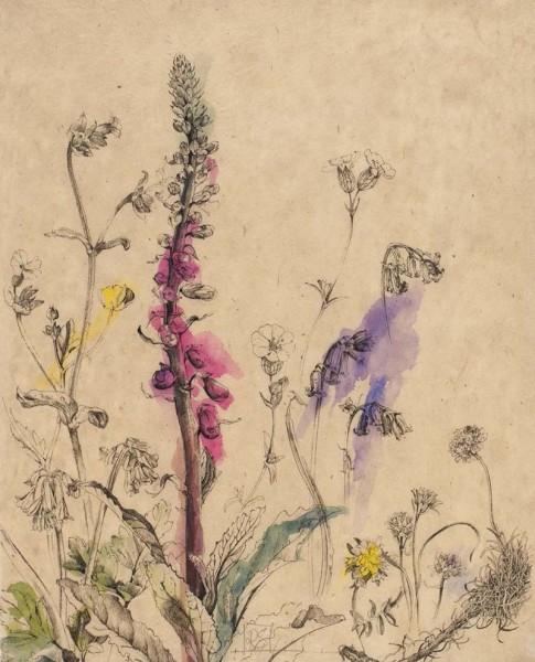 Rosie Sanders, Wild flowers at Predannack