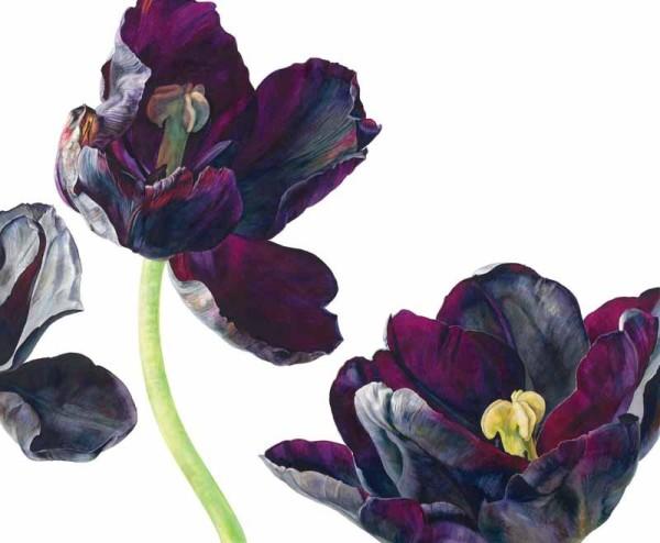 Rosie Sanders, Black Tulip, Paul Sheerer