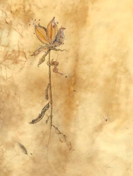 Kate Nessler, Milkweed