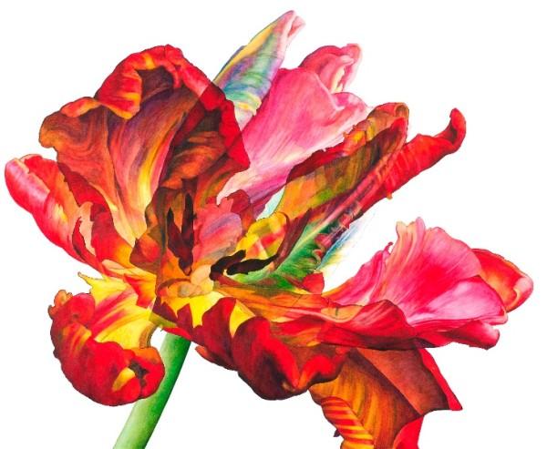 Rosie Sanders, Tulipa
