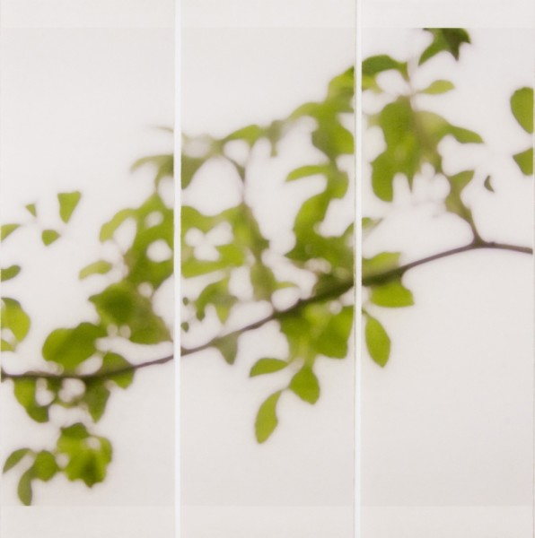 Jeri Eisenberg, First Foliage, 2009