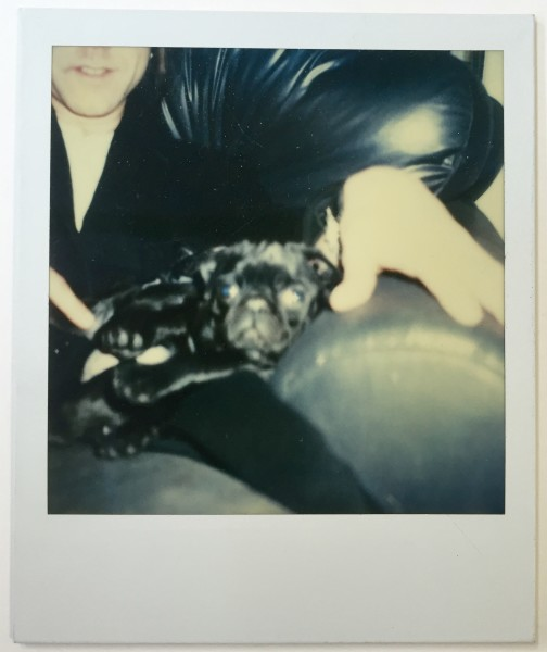 Andy Warhol, Pug with Stephen Sprouse, 1985