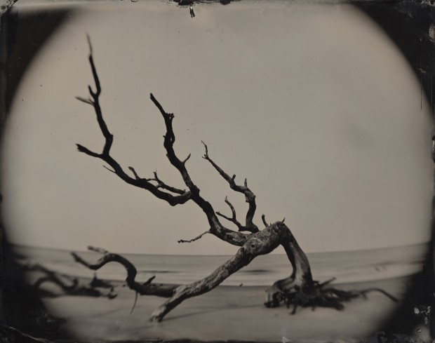 Joni Sternbach 05.02.21 #8 Bent Tree / Jekyll Island Full Plate Ambrotype 20.3 x 25.4 cm 8 x 10 in