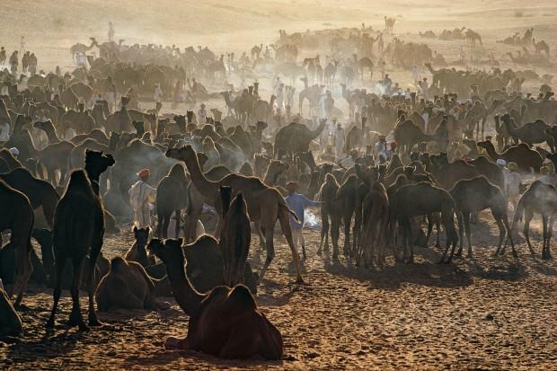 Ernst Haas, Camel Fair, Pushkar, Rajasthan, 1972