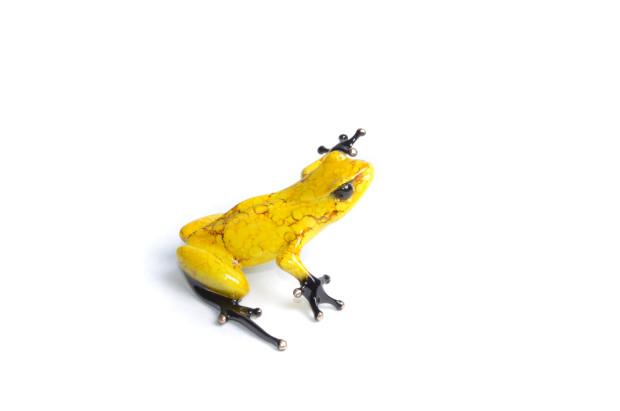 Frogman, Chai - BF195