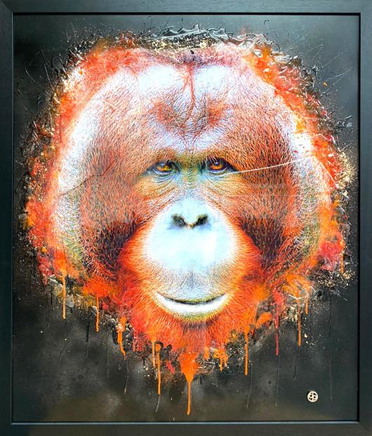 Dan Pearce, Bornean Orangutan, 2020