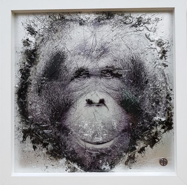 Dan Pearce, Endangered - The Bornean Orangutan, 2018