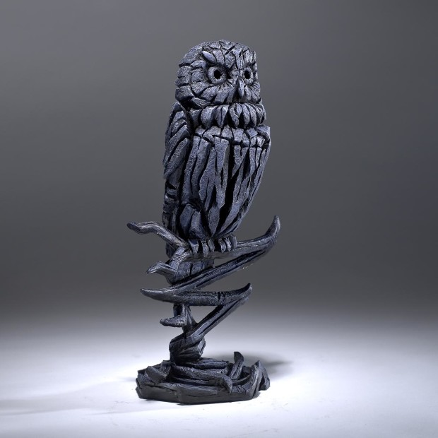Matt Buckley, Owl - Midnight