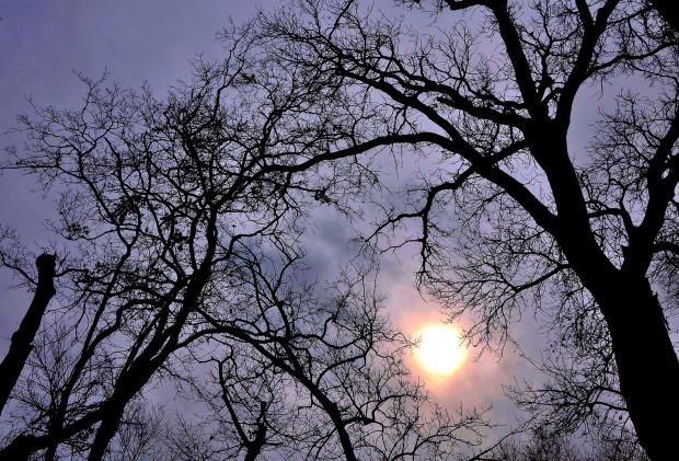 Michael Kerr, Sun and Trees, 2020