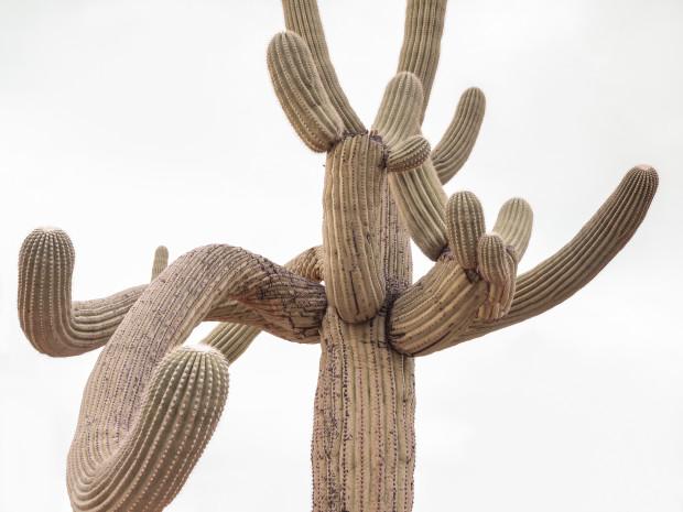 Kristin Kirkley, Saguaro, 2018