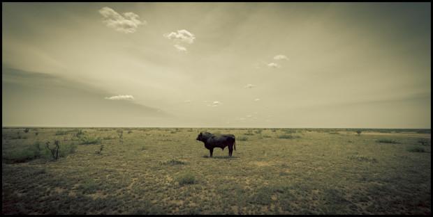 Ashton Thornhill, Bull in the Field, 2020