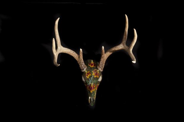 Carter Watkins, Mexican Hat flowers on Deer Skull, 2020