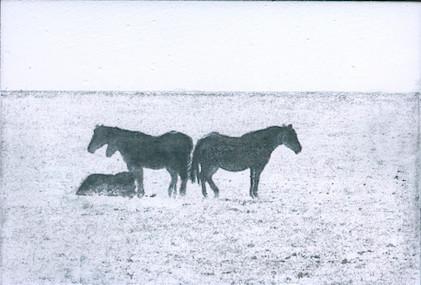 Katie Maratta, Horse Grouping #2, 2019