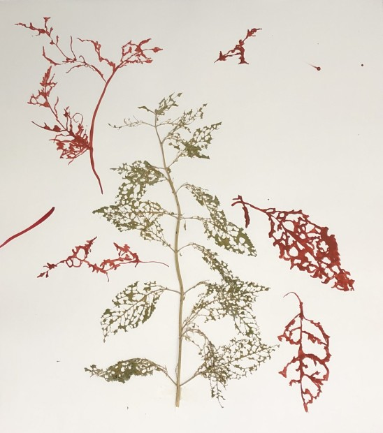 Deborah Mersky, Big Red Meadow