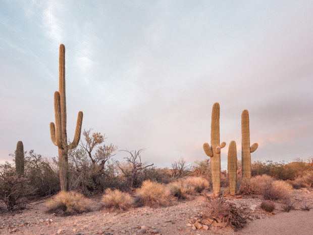 Kristin Kirkley, Sweetwater Road (Arizona), 2018