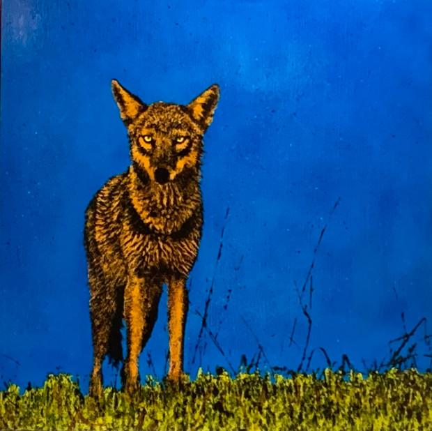 Greg Westfall, Coyote, 2020