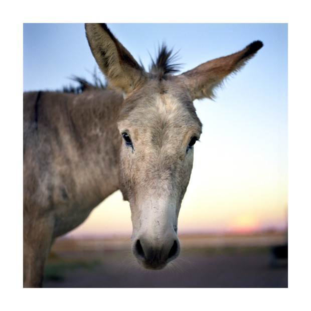 Jill Johnson, Donkey, 2014