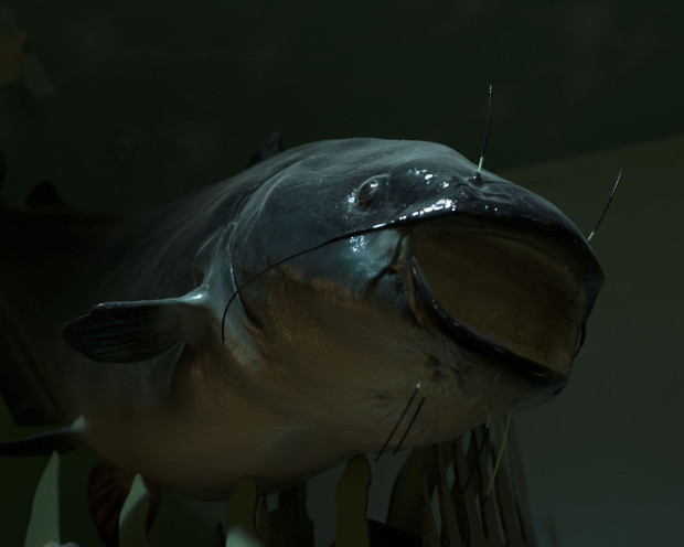 Brooke Johnson, Cave Creatures 2 (blue catfish), 2018