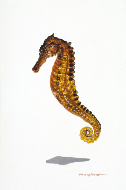 Nancy Lamb, Curly Tail Seahorse, 2020