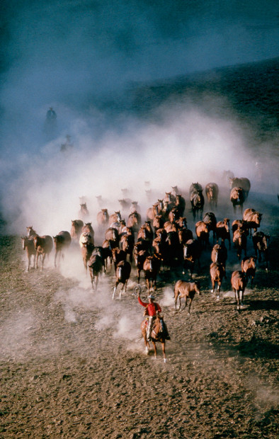 Norm Clasen, Holding the Herd, Polson, MT, 1987