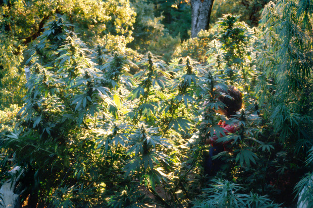 Mel Frank, Tanya in Durban Poison Field, Sonoma County, CA, 1979