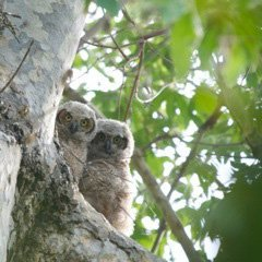 Owl Brothers, 2010