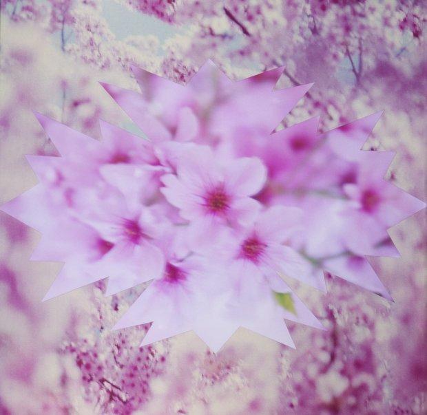 Pink Cherry Blossom Bird, 2010