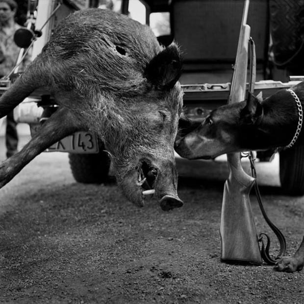 Hunter S. Thompson, Wild Boar, Big Sur, California, c. 1960s