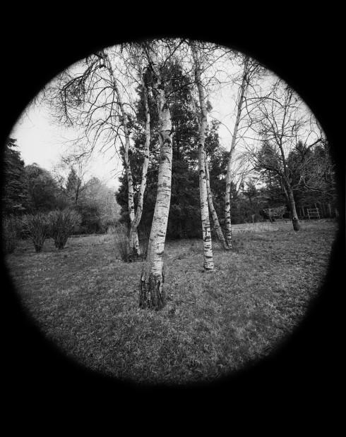 Scott Mead, Back Garden, 1976