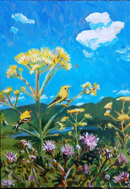 Yellow birds in Ragweed, 2017