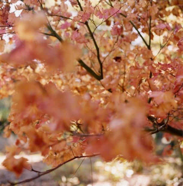 Lisa Eisner, Pirkle Pink Tree, Mill Valley, California, 2004