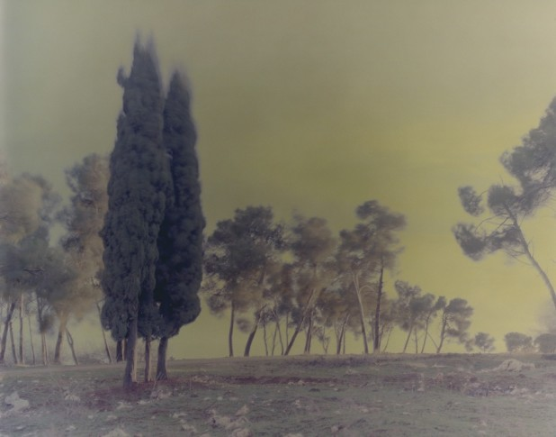 <span class=&#34;title&#34;>Cypresses, Mark 4<span class=&#34;title_comma&#34;>, </span></span><span class=&#34;year&#34;>2005</span>