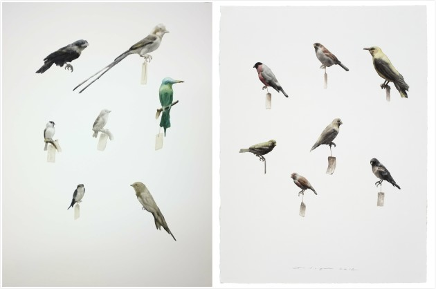 <p><b>Guo Hongwei</b><span>&#160;</span><br /><i>Painting is Collection - Bird 5</i><span>, 2012-2013</span><br /><span><br /></span></p>