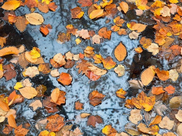 Leaves Suspended