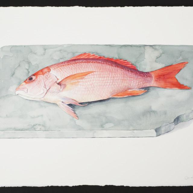 Carol Ivey, Red Snapper, 2019