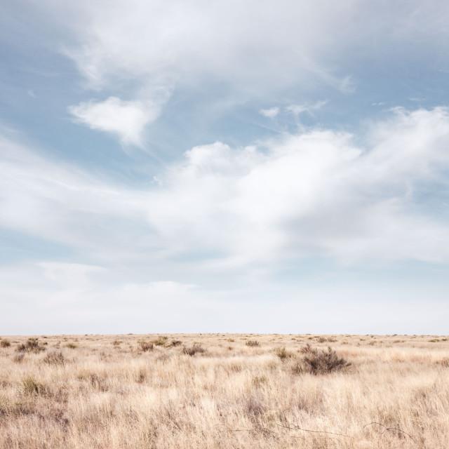 Desertscapes, Kristin Kirkley