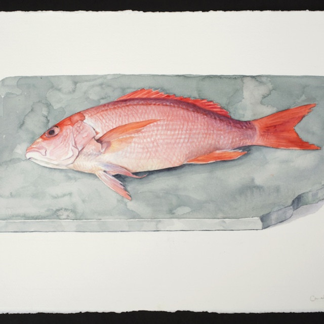 Carol Ivey, Red Snapper, 2019. Watercolor on paper, 15 x 22″