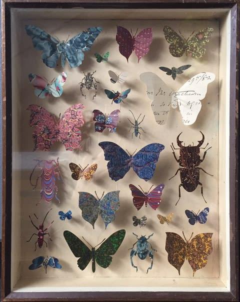 Helen Ward, Entomology Case 5, 2018