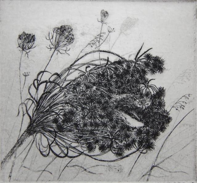 Flora McLachlan, Seednest