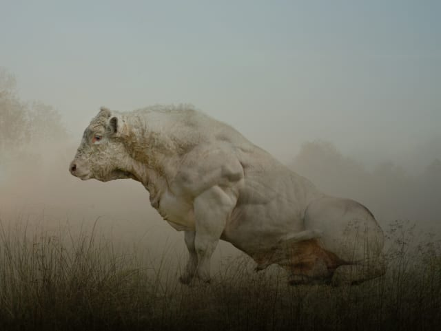 Rory Carnegie, 'Bull Rising', Photographic print, H 105 x 135 framed