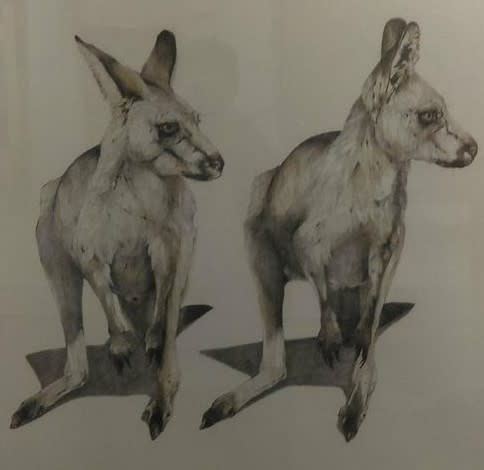 Grey Kangaroos Featherdale Park